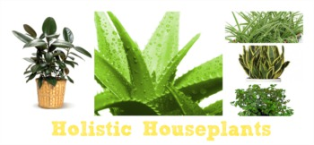 Holistic Houseplants for Your Home