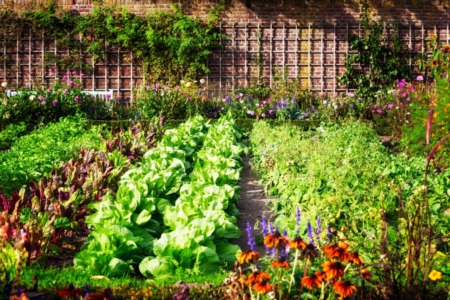 10 Gardening Shortcuts That Save Time, Money and Effort