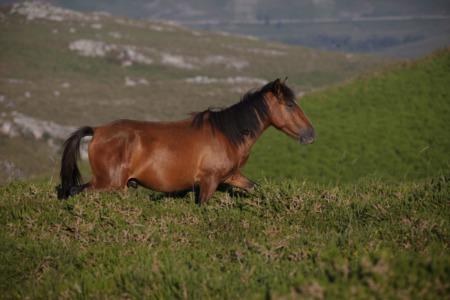Horse Properties in Denver Colorado | A list of Precautions