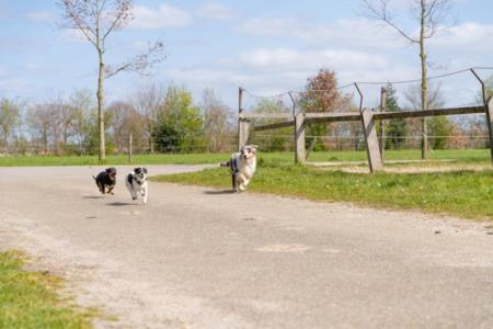 Dog Parks in Highlands Ranch - Dog off leash areas in Highlands Ranch - Hound Hill Dog Park