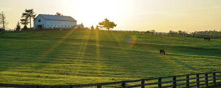 The Ultimate Guide To Buying A Horse Property