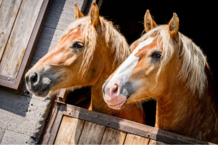 Types of Horses and Equestrian Facilities in Colorado