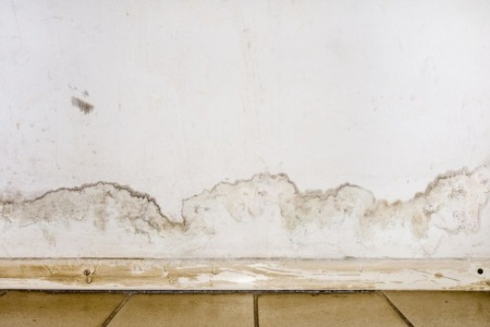 Four Most Common Places To Find Mold in Your Home
