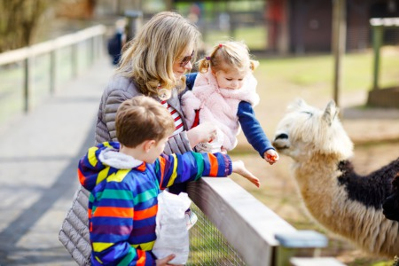 Animal Lovers from Acton Real Estate Visit Sweet Water Alpaca Ranch