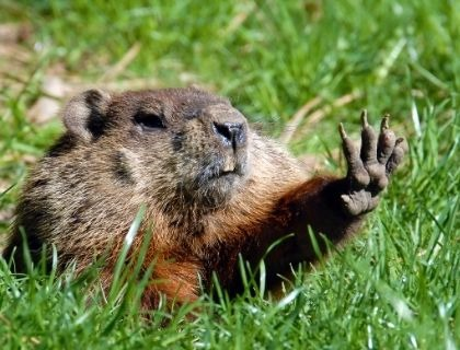 Mark's Market Update - It's Like Groundhog Day, Incredible Interest Rates!