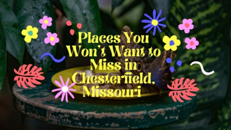 Places You Won't Want to Miss in Chesterfield, Missouri