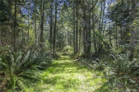 Buying Land in Fircrest