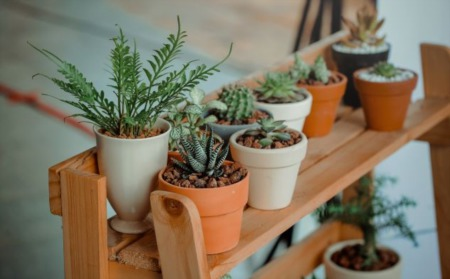 Easiest Indoor Plants For Your Home