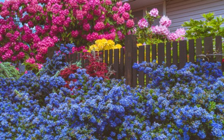 How To Take Care Of Your Garden In Summers