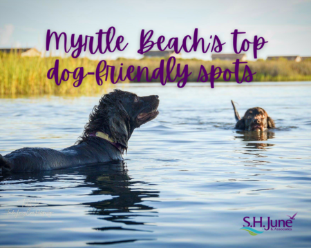 Dog Friendly Places - Greater Myrtle Beach Area