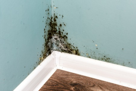 5 Household Odors & What More They Might Indicate