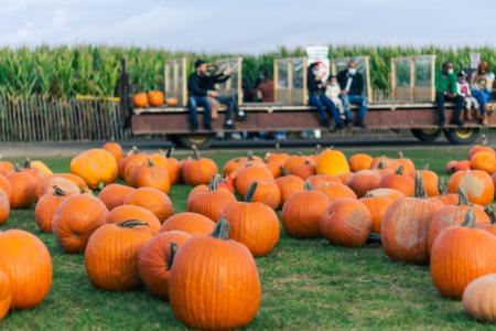 The DMV'S Top 5 Autumn Events & Activities