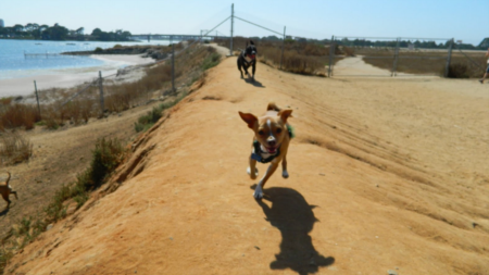 Let Your Dog Run Free