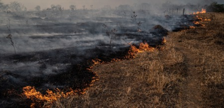 Wildfires May Reheat Lumber Prices