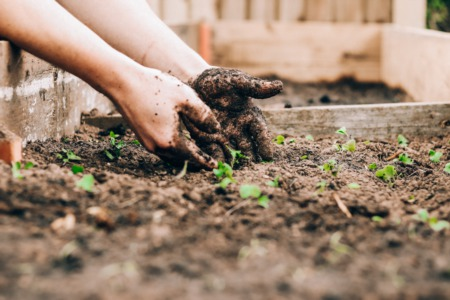 Why Isn't My Garden Thriving? 5 Tips for Troubleshooting Unhappy Plants