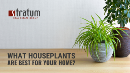 What Houseplants Are Best For Your Home?