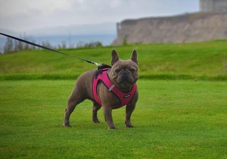 Soldier's Best Friend 10th Annual Golf Tournament