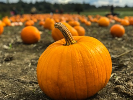 Top Pumpkin Patches near Wilmette, IL