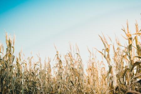 Top Corn Mazes near Northfield, IL