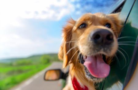 Dog-Friendly Destin