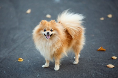 4 Dog Breeds For Apartment Living | Condo Friendly Dogs