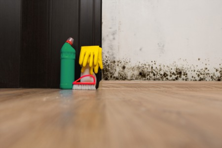 A Beginners Guide to Toxic Mold