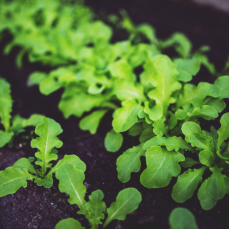 10 Healthy and Delicious Leafy Greens to Grow in Your Garden