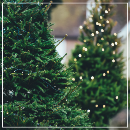 Guide to Austin Christmas Tree Recycling and Disposal