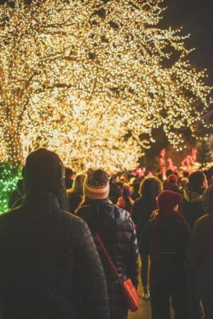 Where Calgary Homes Shine - Best Holiday Light Shows