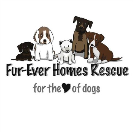 Fur-Ever Homes Rescue: Every Animal Deserves a Second Chance