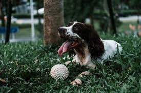 Boca Raton Dog Parks | Favorite Spots To Walk Your Best Friend