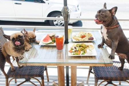 4 Dog Friendly Restaurants in Boca Raton | Where to Eat with your Dog in Boca