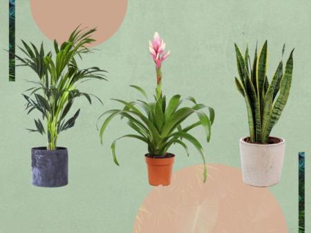 Top 5 Best Indoor Plants For Your Boca Raton Home