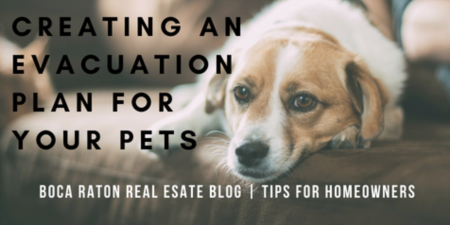 Protecting Your Pets During a Hurricane | Creating an Evacuation Plan For Your Pets