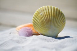 5 Tips for Beach Side Cottage Charm