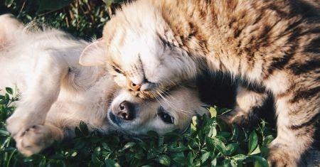 Pet Storage Problems Solved