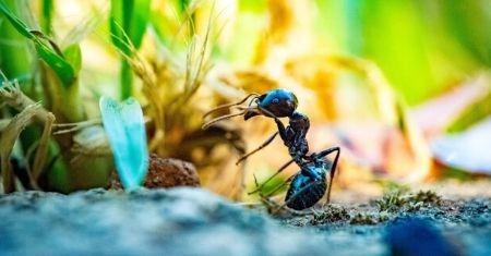 Keep Your Home Bug Free
