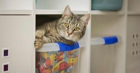 Do You Need to De-Clutter?