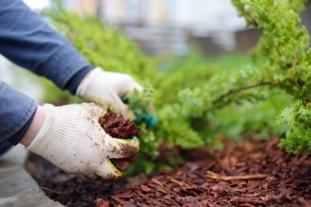 Summer Landscaping Projects