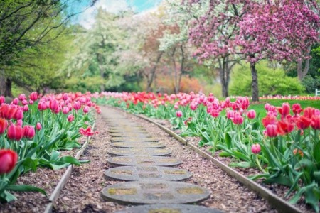 Where to Go in Madison if You're into Gardening