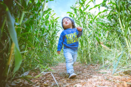 Top Spots for Corn Mazes This Fall in Madison