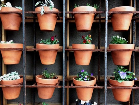 Which Plants Work Great for Your Indoor Garden This Winter?