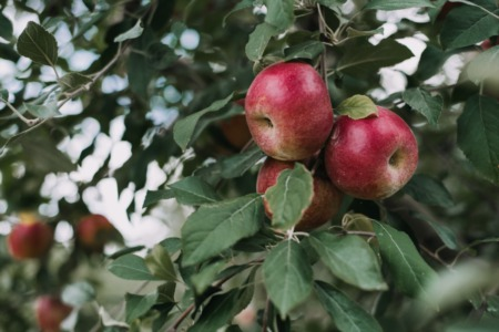 Apple Orchards to Visit Near Madison This Fall