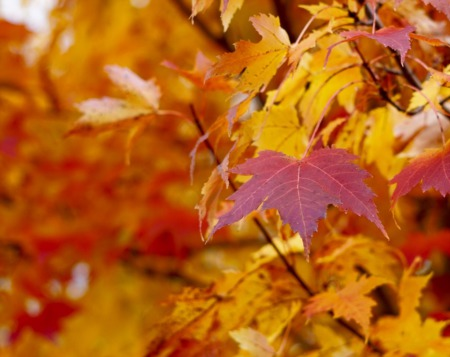 Top Fall Events Coming to Madison Soon