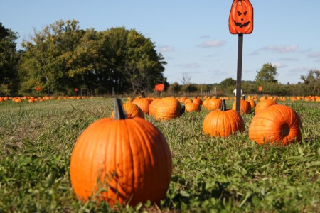 Top Madison Area Pumpkin Patches & Orchards for Fall 2019