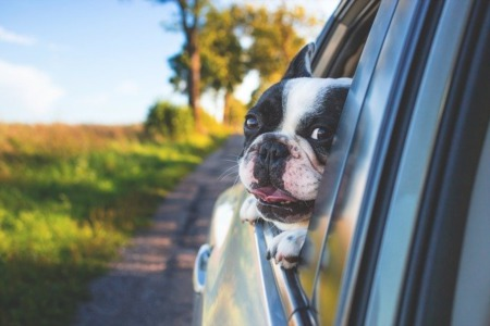 5 Tips for Introducing Your Dog to Your New Home