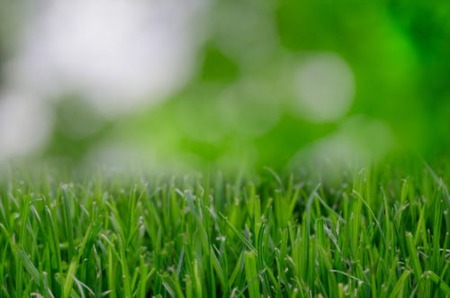 Keeping Your Lawn Healthy During Summer's End: Sensible Tips + 3 Area Lawn Pros