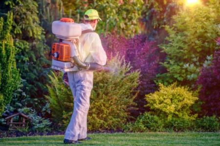 Identifying and Eliminating the Unwanted: Homeowner's Basics of Pest Control