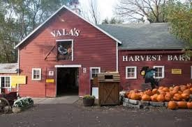 Warm Cider, Fall's Crisp Welcome, and Time-Tested Tradition: Vala's Pumpkin Patch