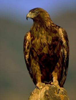 Golden Eagle Home Sales Update
